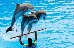 dolphin show sharm paradise excursions