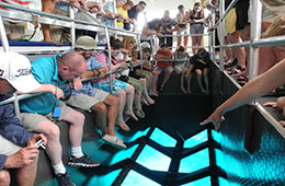 glass bottom boat excursions in sharm el sheikh with paradise