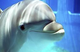 dolphin swim in sharm el sheikh