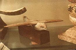 saqqara bird museum