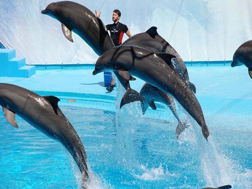 Dolphin Show sharm 2
