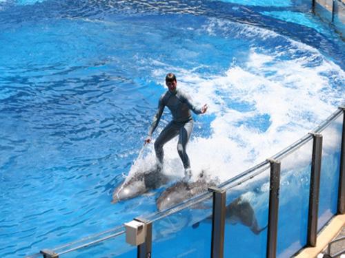 Dolphin Show sharm