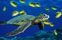 Sharm Sea trips- adventures