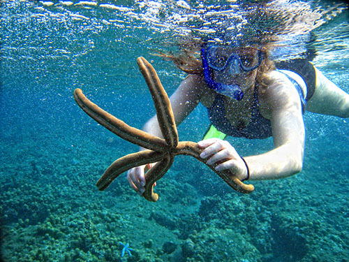 abu galum snorkeling day trips with sharmers
