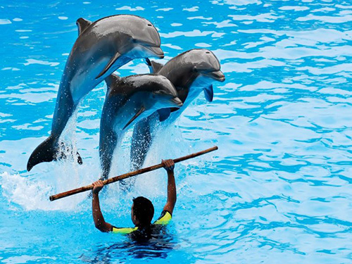 dolphin show excursions