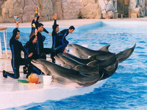dolphin show sharm el sheikh 2