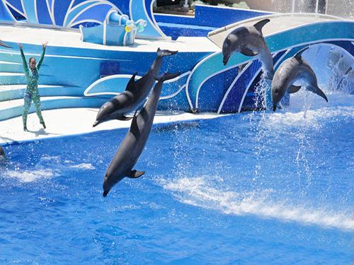 dolphin show sharm el sheikh 3