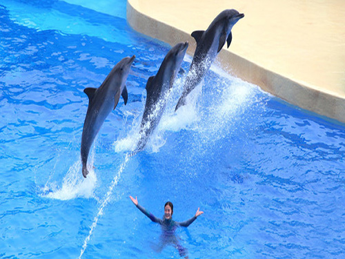 dolphins show sharm el sheikh 5