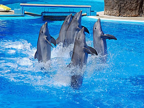dolphins show with sharmers in sharm 2