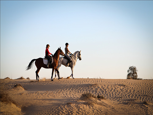 horse riding desert trip with sharmers sharm el sheikh