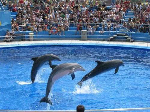sharm el sheikh dolphin show trip