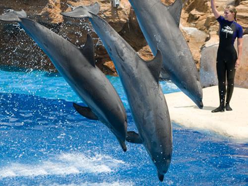 sharm el sheikh dolphin show