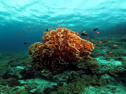 sharm el shiekh ras mohamed corals red sea 9