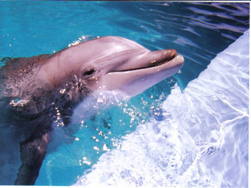 sharm el shiekh swimming with dolphins 7