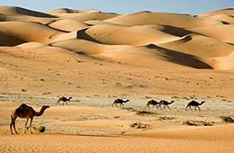 sharm el sheikh desert safari tours with sharmers