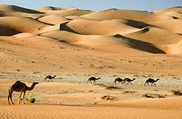 sharm el sheikh desert safari tours with sharmers