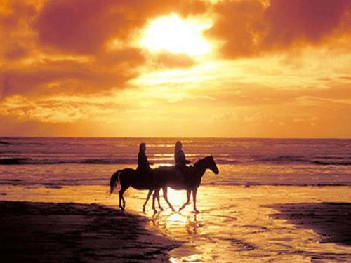sunset horse riding sharm el sheikh