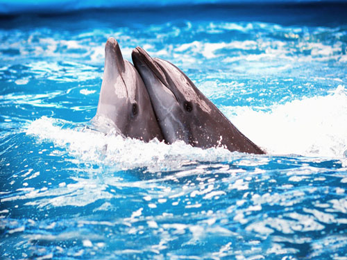 swimming with dolphins in sharm el sheikh 8