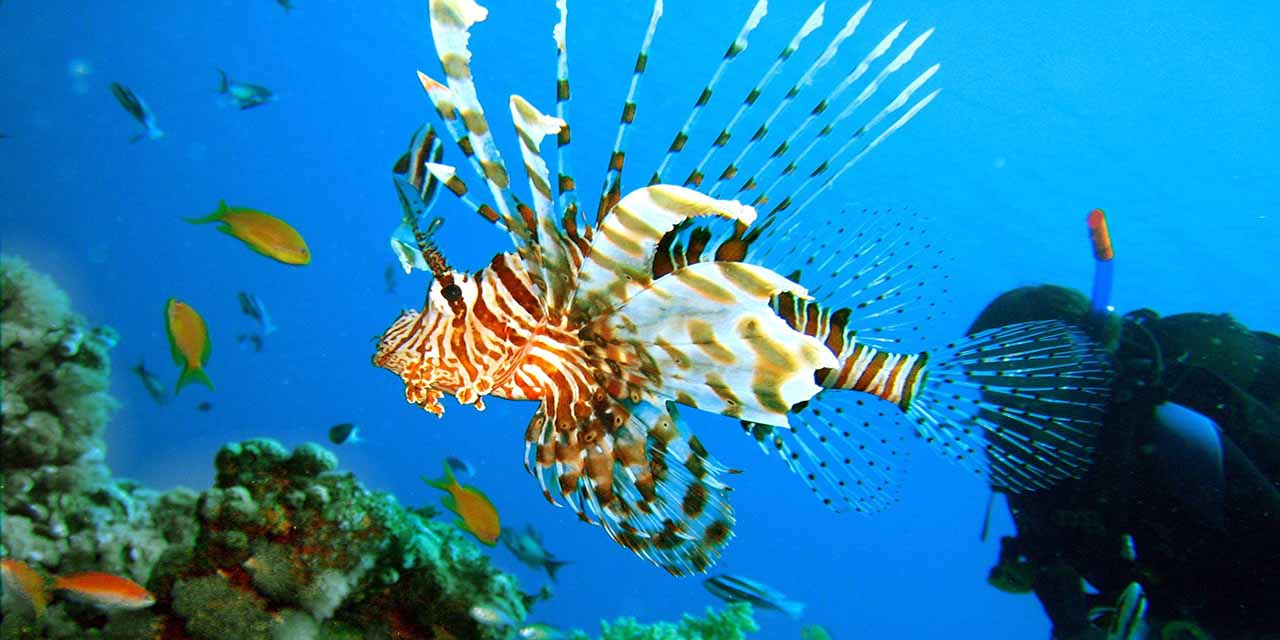 ras mohamed red sea underwater sharm el sheikh